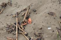 spazzatura, riva, mare (1)