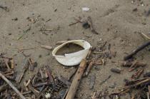 spazzatura, riva, mare (2)