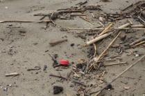 spazzatura, riva, mare (3)