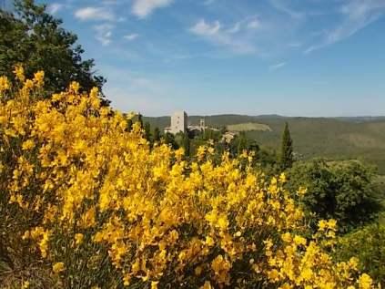 vertine ginestre fiorite (16)