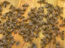 api-operaie