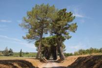 badia a monastero berardenga e susine gialle (2)