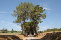 badia a monastero berardenga e susine gialle (3)