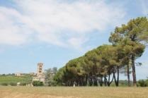 badia a monastero berardenga e susine gialle (41)
