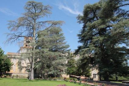 badia a monastero berardenga e susine gialle (5)