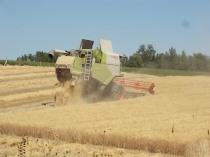 berardenga taglio grano 2019 (2)