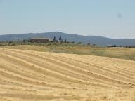 berardenga taglio grano 2019 (4)