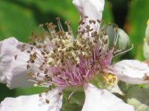 fiore di mora (2)