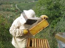 miele-api-arnie-alveari-vertine-3
