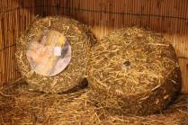 pecorino erborinato caseificio la fonte (4)