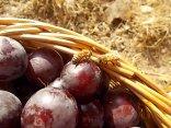 raccolta susine rosse vertine (11)