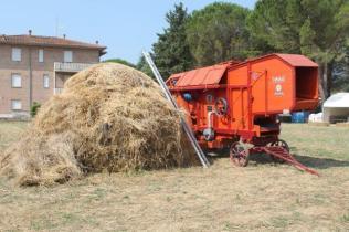 rievocazione battitura del grano asciano (1)