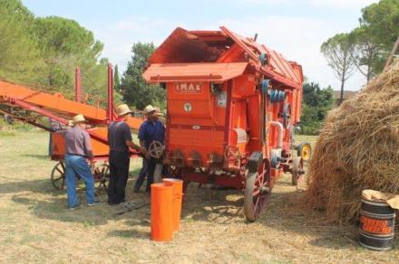 rievocazione battitura del grano asciano (2)