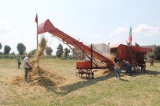 rievocazione battitura del grano asciano (4)