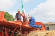 rievocazione battitura del grano asciano (5)