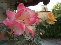 rosa e chiesa di vertine (1)