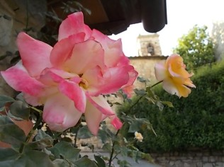 rosa e chiesa di vertine (2)