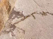 cane pisciare siena (18)