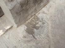 cane pisciare siena (3)