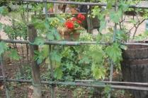 montalcino, tita, giardino, tavoli ristorante (18)