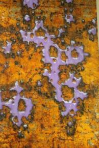 enzo gambelli personale antica querciolaia (5)