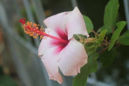 orto botanico siena (12)