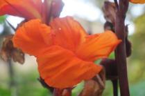 orto botanico siena (13)