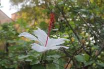 orto botanico siena (14)