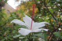 orto botanico siena (15)