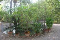 orto botanico siena (19)