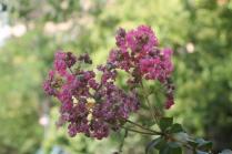 orto botanico siena (24)