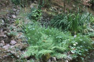 orto botanico siena (31)
