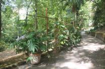 orto botanico siena (35)