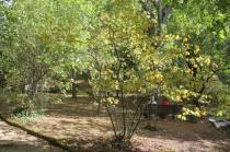 orto botanico siena (36)