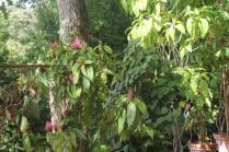 orto botanico siena (37)