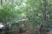 orto botanico siena (4)