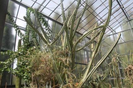orto botanico siena (42)
