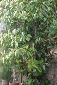 orto botanico siena (46)