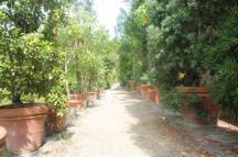 orto botanico siena (48)