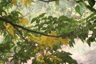 orto botanico siena (49)