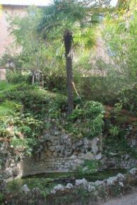 orto botanico siena (6)