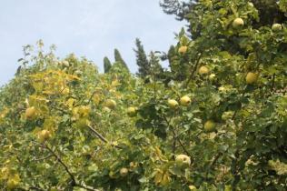 orto botanico siena (66)