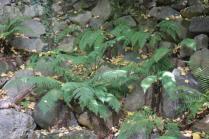 orto botanico siena (73)