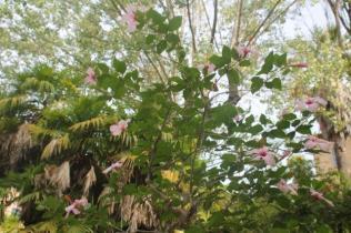 orto botanico siena (76)