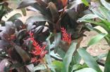 orto botanico siena (78)