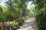 orto botanico siena (79)