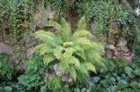 orto botanico siena (80)