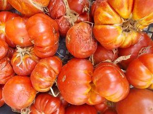 pomodori settembre (4)
