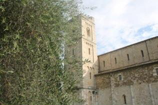 sant'antimo olivi carichi di olive (22)