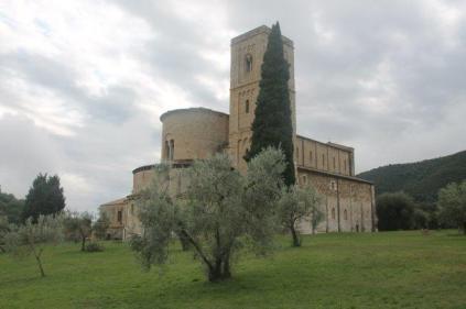sant'antimo olivi carichi di olive (30)